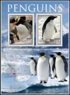 Pingouins - Pinguïns & Vetganzen