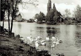EISENHÜTTENSTADT : Am Oder-Spree-Kanal - Affr Philatélique - Eisenhuettenstadt