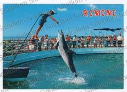 RIMINI  DELFINO - Dolphin - Rimini