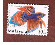 MALESIA (MALAYSIA)  -  SG 1133  -   2003  FISHES: BETTA SPLENDENS  -  USED ° - Malesia (1964-...)