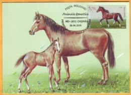2019 Moldova Moldavie Fauna. Domestic Animals. Maxicard Horse. - Farm