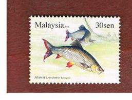 MALESIA (MALAYSIA)  -  SG 1333  -   2006 FISHES: HEVEN' S CARP  -  USED ° - Malesia (1964-...)