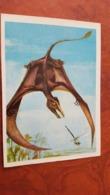 Sordes / Small Pterosaur  - Dinosaur Serie - Old USSR Postcard 1983 - Altri