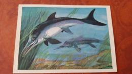 Dinosaur Serie - Old USSR Postcard 1983 - Ichthyosaur - Altri