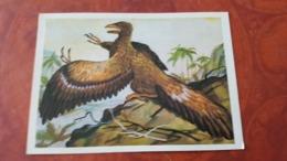 First Bird Archaeopteryx - Bird-like Dinosaur / 1980s Postcard - Uccelli