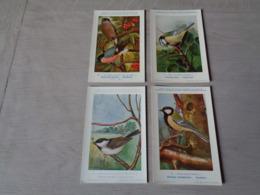 Beau Lot De 20 Cartes Postales Oiseaux  Oiseau  Illustrateur H.Dupond     Mooi Lot Van 20 Postkaarten Van Vogels  Vogel - Postkaarten