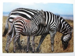 Zebra - Zebra's