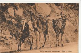LIBAN  ALEY - Le Camelier Et Ses Chameaux - Lebanon