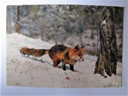ANIMAUX - Renard - Tierwelt & Fauna