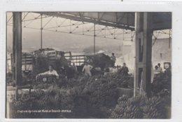 Sindicato Agricola Del Norte De Tenerife. Orotava. - Tenerife