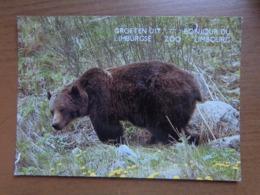 Beer, Grizzly / Groeten Uit Limburgse Zoo -> Onbeschreven - Ours