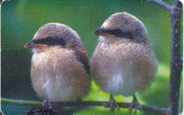 ROMANIA -  BIRDS - 10.000EX - Romania