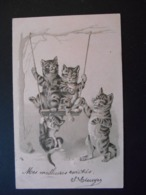 Famille De Chats Faisant De La Balançoire - Gaufrée - Katten