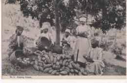 PULPING COCOA - Jamaica