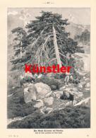 1390 Hermann Nestel Monte Rotondo Korsika Druck 1904 !! - Drucke