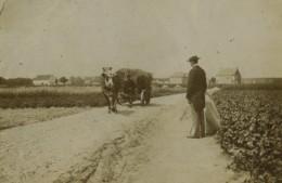 France Lille Lambersart Hippodrome Et Campagne 9 Anciennes Photos Amateur 1902 - Places