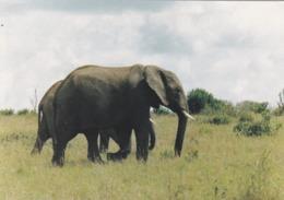 CARTOLINA - MALAWI - LIWONDE NATIONAL PARK ELEPHANTS - Malawi