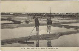 44 Les Marais Salants Recolte Du Sel - France