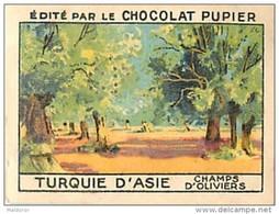 PU3    TURQUIE  D ' ASIE  SMYRNES  CHAMPS  D' OLIVIERS  .EUROPE AGRICULTURE   7 X 5 Cm    Chocolat Café - Vieux Papiers
