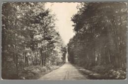 CPSM 44 - Le Gavre - Une Allée En Forêt - Le Gavre