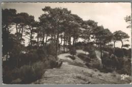 CPSM 44 - Tharon - Pins Sur Les Dunes - Tharon-Plage