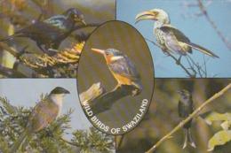 SWAZILAND - Wild Birds Of Swaziland - Swasiland
