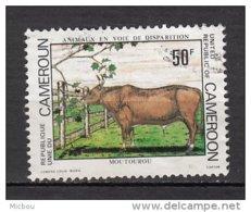 Cameroune, Cameroon, Boeuf, Bull, Taureau, Taurus - Farm