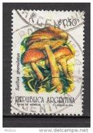 Argentine, Argentina, Champignon, Mushroom - Pilze