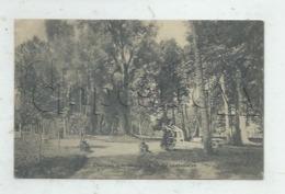 Ardon (45) : L'arbre Le Saule Séculaire Dans Le Parc Du Château En 1904 PF. - France