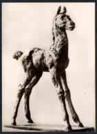 C8753 - Rene Sintenis - Stehendes Fohlen - Rembrandt Verlag - Skulptur - Sculptures