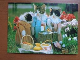 Katten, Cats, Chats / Picnic (1984 By Satoru Tuda) -> Unwritten - Chats