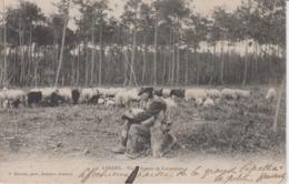 LANDES - Vieux Joueur De Cornemuse ( Gardien De Troupeau Mouton ) - Elevage