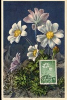 48082 Finland, Maximum  1950  Flower, Anemone - Maximum Cards & Covers