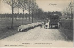 Wyneghem,   De Steenweg.   -   1908  Baar   Brugge - Wijnegem