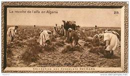 S9  ALGERIE AGRICULTEUR  COLON RECOLTE DE L ' ALFA 10 X 6 Cm  (cliché De O.E )TRADECARD Africa Afrique - Vieux Papiers