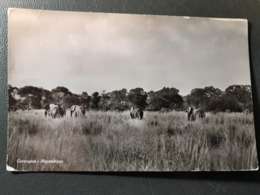 MOZANBIQUE ELEPHANT - Mozambique
