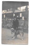 Dressage Ou Concours Canin Tervueren ? - Dogs