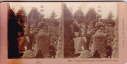 1895 / KILBURN 10329 / I HOPE OF THE BEAUTIFUL ... - Photos Stéréoscopiques