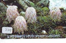MUSHROOM CHAMPIGNON SETA Fungo Paddestoel (229) - Fleurs