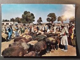 KABOUL KABUL MOUTON - Afghanistan