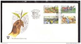 VENDA FDC + Karte 26-29 Teeanbau (Scan)(13837) - Venda