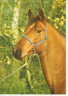 Tête De Cheval - Paard- Horse (Nr 1) - Horses