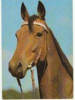 Tête De Cheval - Paard- Horse (Nr 4) - Horses