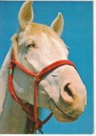 Tête De Cheval - Paard- Horse (Nr 5) - Chevaux