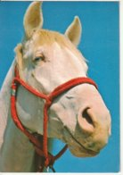 Tête De Cheval - Paard- Horse (Nr 5) - Horses