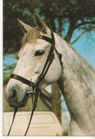 Tête De Cheval - Paard- Horse (Nr 20) - Chevaux