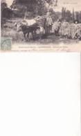 Environs De Cahors - LABERAUDIE - Récolte Du Tabac - Cahors