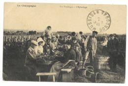 51-LA CHAMPAGNE-Les Vendanges - L'Epluchage...  Animé  (coin Pli) - Francia