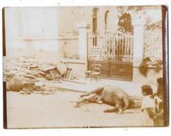 GUERRE 1914-18 Photographie VERDUN Bombardements Rue Cadavres De Chevaux - Verdun