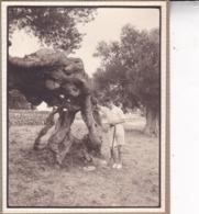 MALLORCA PALMA DE MAJORQUE  Miramar Arbre Remarquable 1930 Photo Amateur Environ 7,5 Cm X 5, 5 Cm - Places